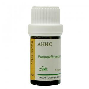 Анис (Pimpinella anisum)