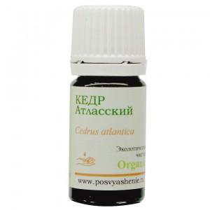 Кедр атласский (Cedrus Atlantica) organic