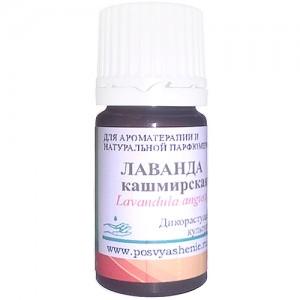 Лаванда кашмирская (Lavendula angustifolia)