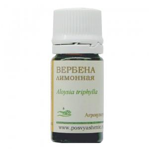 Вербена лимонная (Aloysia triphylla)